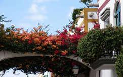 Virághíd, Puerto de Mogan, Gran Canaria, Spanyolország