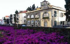 Funchal virágfolyó, Madeira