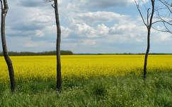 Repce mező