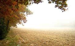 ősz, köd, szántóföld