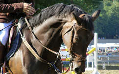 Gyönyörű pej ló