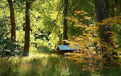 erdő ház ősz