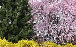 Tavaszi összhang