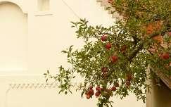 gyümölcs ház alma