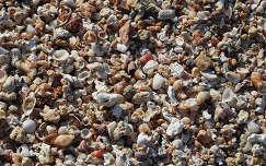kagyló csiga kavics
