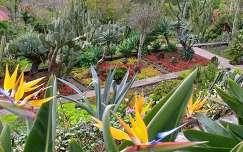 Madeirai kert, Portugália