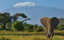 Elefánt és a Kilimandzsáró