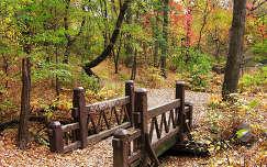 erdő híd ősz