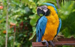 madár papagáj