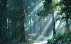 erdő út fény