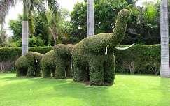 Zöld elefántok, Tenerife, Kanári-szigetek