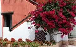 Tenerifei házfal, Spanyolország