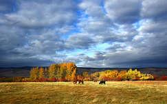 szarvasmarha ősz háziállat felhő