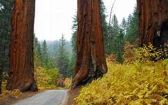 fenyő fa út örökzöld ősz