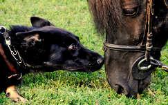 kutya-ló barátság