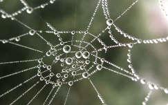 a pók gyöngysora