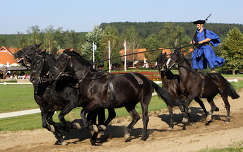 Lázár lovaspark Domonyvölgy