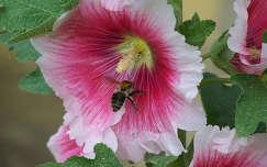 Virágporszüret