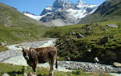 Osztrák Alpok, boci