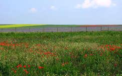 Veszprém határában, Magyarország