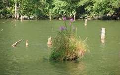 Gyilkos-tó, Erdély, Románia