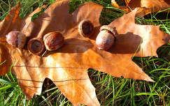 Szarvas - Arborétum (Pepikert) Ősz - őszi csendélet.  fotó: Kőszály