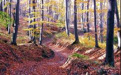 Vértesi erdő