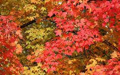 Falevelek őszi színekben