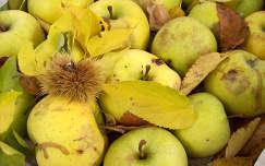gyümölcs levél alma