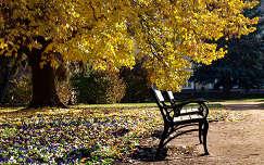 Székesfehérvár, park