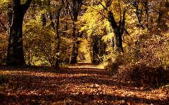 Szarvas-Arborétum