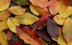 őszi színkavalkád
