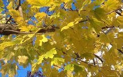 Őszi falevelek. Fotó: Csonki