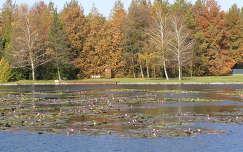 Hévízi tó a tavirózsákkal