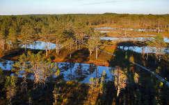Lahemaa Nemzeti park Észtországban