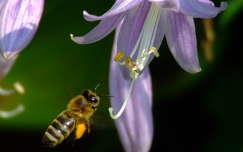 Méhecske virággal