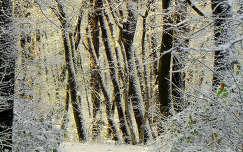 fa erdő tél