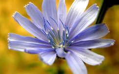 KékSárga