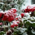 Korai hó
