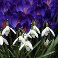 A tavasz első hírnökei