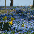 Tavaszi virágmező