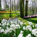 Lisse, Holland, Keukenhof