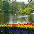 Nederland-Lisse, Keukenhof
