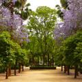 SEVILLA, Parque Maria Louisa