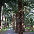 Pálmaerdő