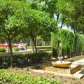 Parkrészlet Palma Mallorca