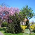 Tavasz - Debrecen