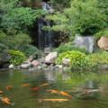 Japan kert  Rockford  Illinois,  USA