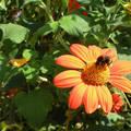 Nyári virág - rovar