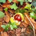 Őszi avar- fotó Kőszály